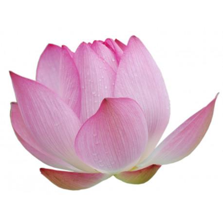 Sticker Fleurs rose zen