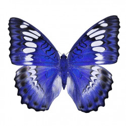 Sticker Papillon - bleu marine