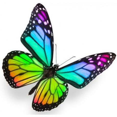 Sticker Papillon arc en ciel