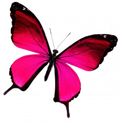 Sticker Papillon rouge, rose et violet