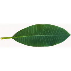 Sticker feuilles arbre verte