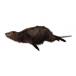 Sticker marmotte
