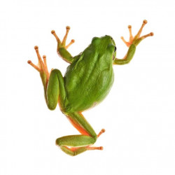 Sticker grenouille vue de haut