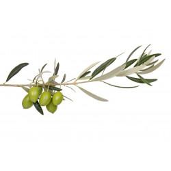 Sticker olives sur branche
