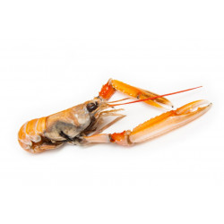Sticker langoustine