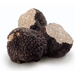 Sticker truffe noire