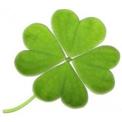Sticker Tréfle chance 4 feuilles vert