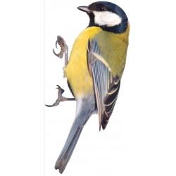 Sticker oiseau moineau bleu jaune