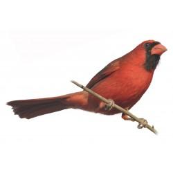 Sticker oiseau moineau rouge