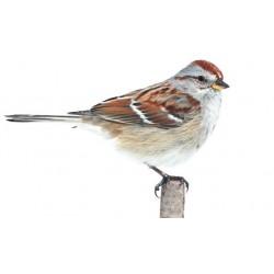 Sticker oiseau moineau