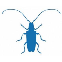 Insecte REFG277