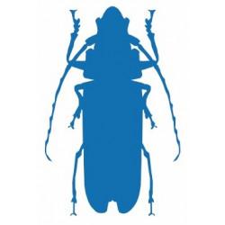 Insecte REFG323