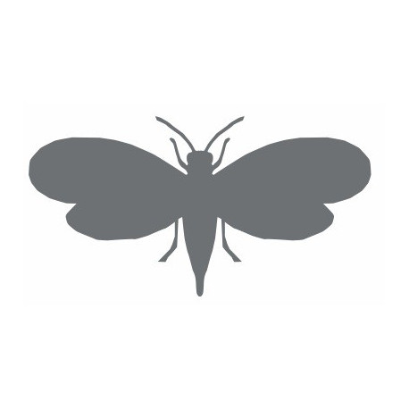Insecte REFG372