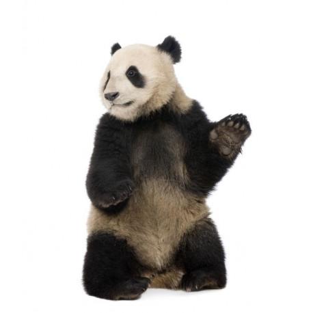Sticker Mural Panda Debout Univers Savane Jungle
