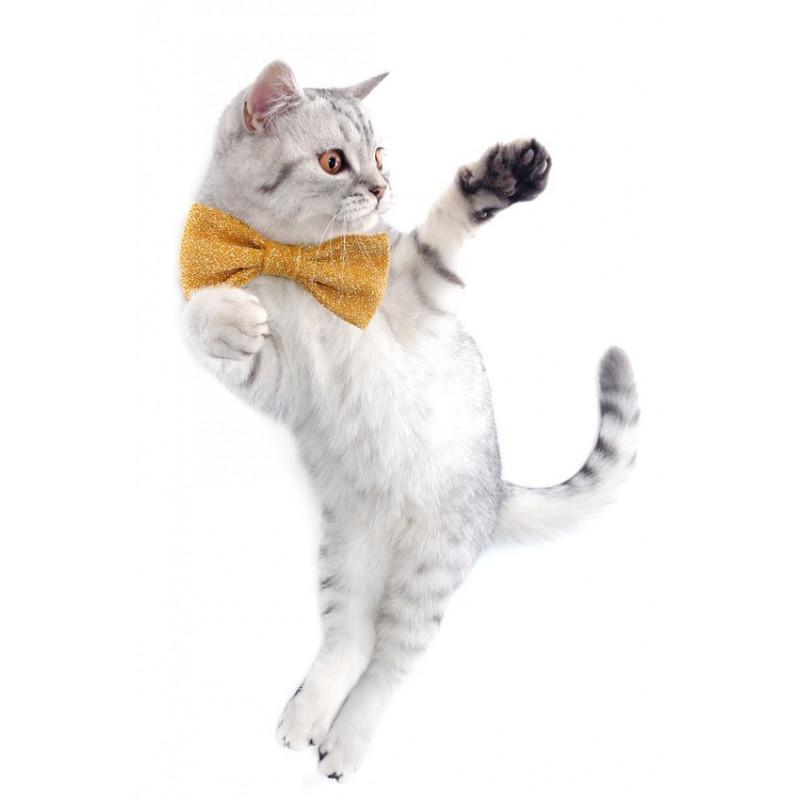 Limitation Vitesse Cat