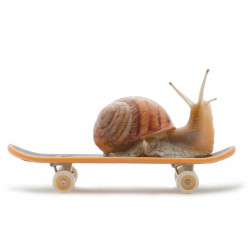 Escargot Skate Board