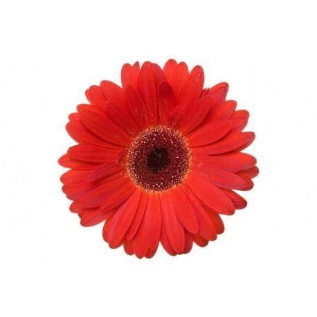 Sticker Mural Fleur Rouge Univers Fleurs Pour Votre