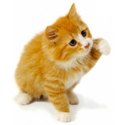 Sticker chat roux triste