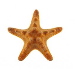 Sticker étoile de mer